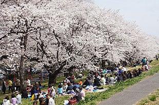 桜の下でお花見を楽しむ人々