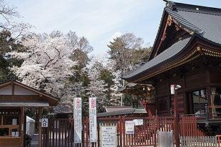 国宝の本殿彫刻と満開の桜