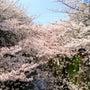 春のエクステ
