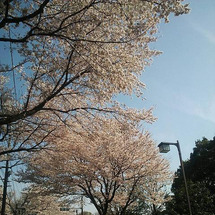 ☆春ですね☆