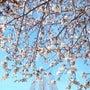 富士と桜と日本人