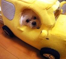ぼくの愛車、いいでしょ!