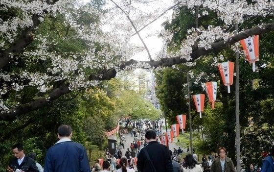 上野の桜と階段