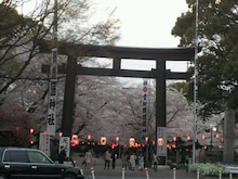 桜at護国神社