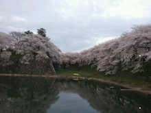 桜atお堀