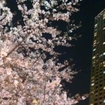 桜と映画。