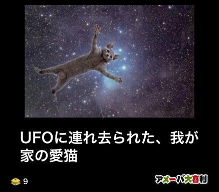 UFOに連れ去られた、我が家の愛猫