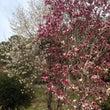 春の良いところ