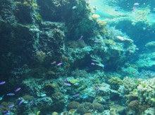 美ら海水族館1