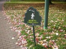 落枝に注意