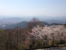 桜201304-1