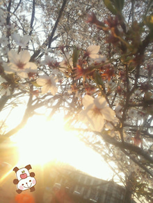 2014-04-11-17-49-18_deco.jpg