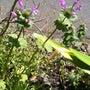 春の植物3