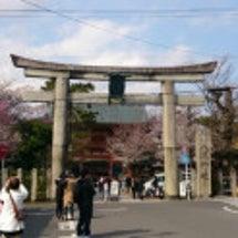 京都の桜便り❼ 円山…