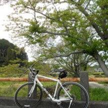 クロスバイクでポタ。