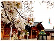 拝殿前の櫻