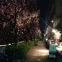八重桜❣❣