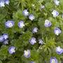 春の植物4