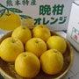 爽やか柑橘、河内晩柑