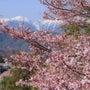 高遠桜ツーリングのお…