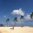 ハワイは南国