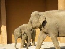 東山動物園 ゾウの親子