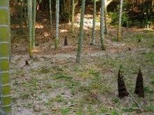 東山植物園 竹林
