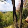 森の中 撮影 ▷▷
