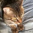 猫のヒモ好きはガチ