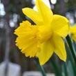 ガーデンの『春の花』…