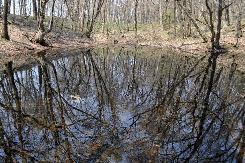 2014年4月下旬の白神山地十二湖22