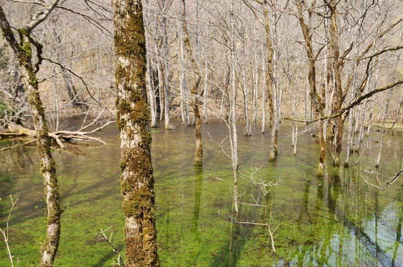 2014年4月下旬の白神山地十二湖3