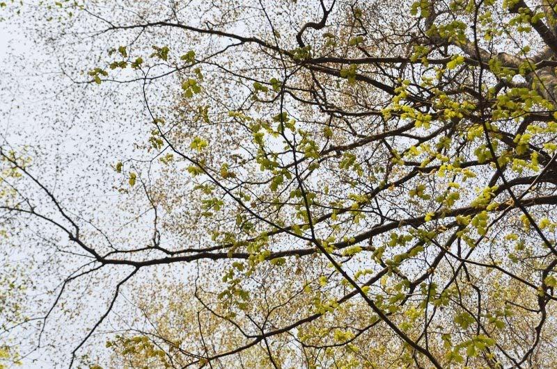 2014年4月下旬の白神山地十二湖10