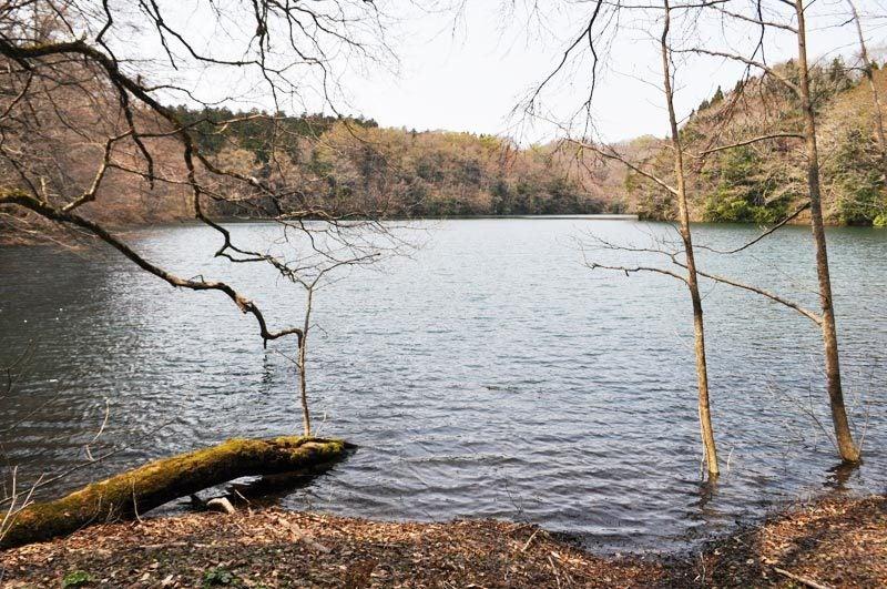 2014年4月下旬の白神山地十二湖6