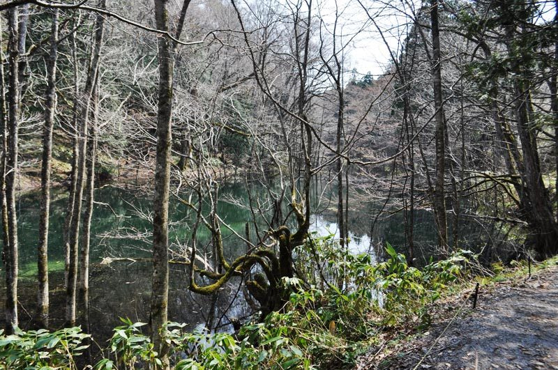 2014年4月下旬の白神山地十二湖2