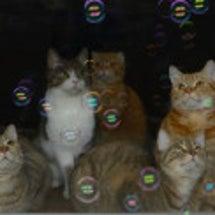 猫とシャボン玉。