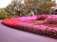 ツツジ山。色が鮮やかすぎる!