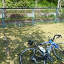 のほほんサイクリング…