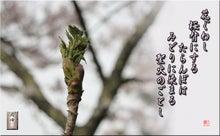 フォト短歌「タラの芽と桜」
