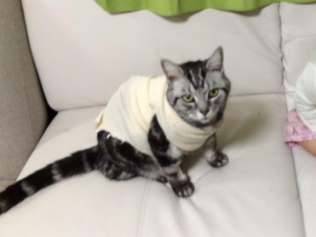 【猫ブログ】自宅で皮下点滴11日目。奥様 ...