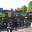 初夏の上野動物園の過…