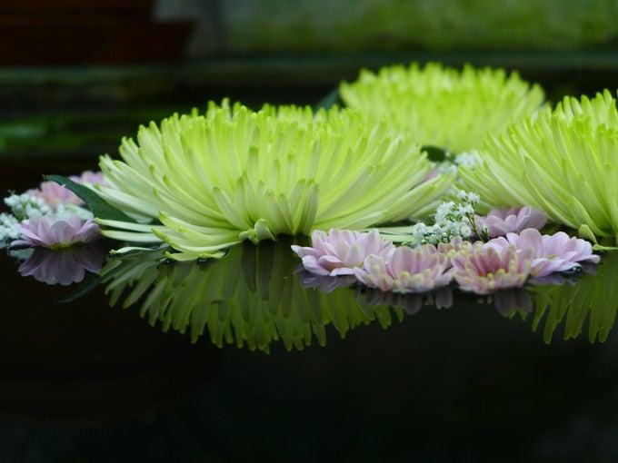Damm_blommor