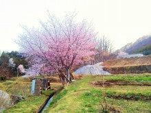 20140502_SAKURA_3