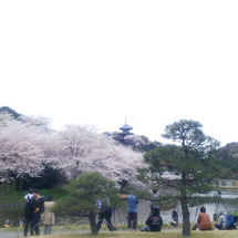 花咲く町、三渓園へ。
