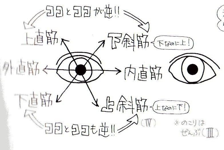 「外転眼が上(下)を向く時、外転側の下(上)斜筋」の画像検索結果