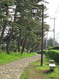 初音ヶ原の松並木
