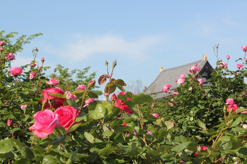 プリンス芝公園の薔薇