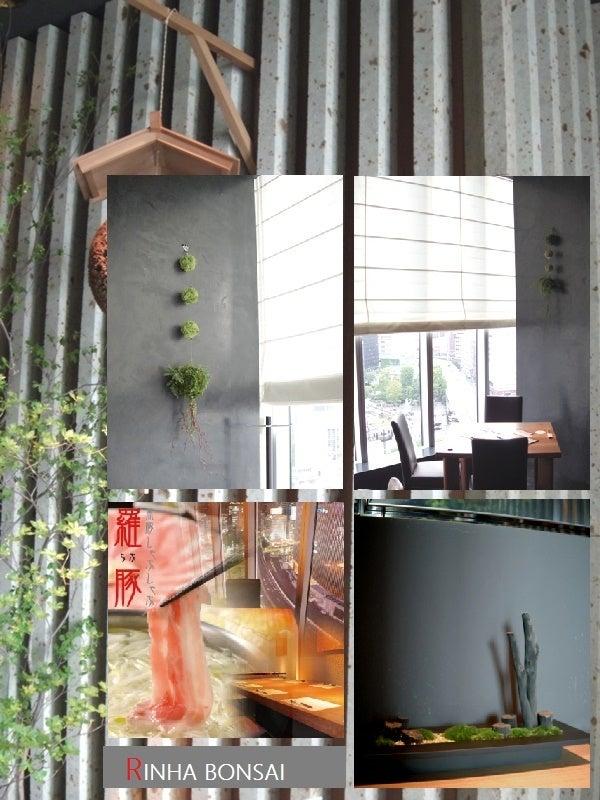 琳葉盆栽 苔庭 銀座