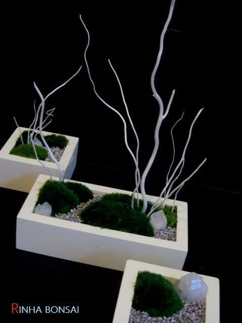 琳葉盆栽 苔庭