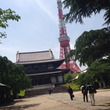 増上寺 zojoji…